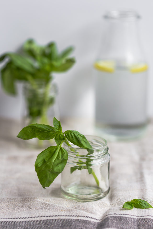 fresh basil herb in jar