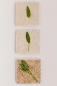 fresh sage leaves on tiled table