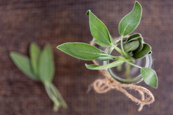 sage leaves in jar on table