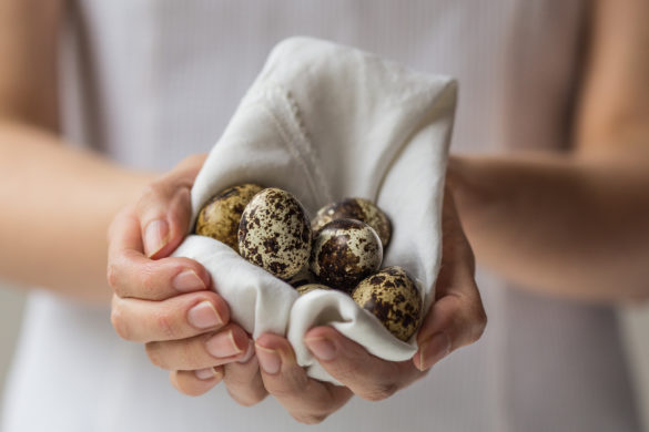 Quail eggs in napkin in girls hands