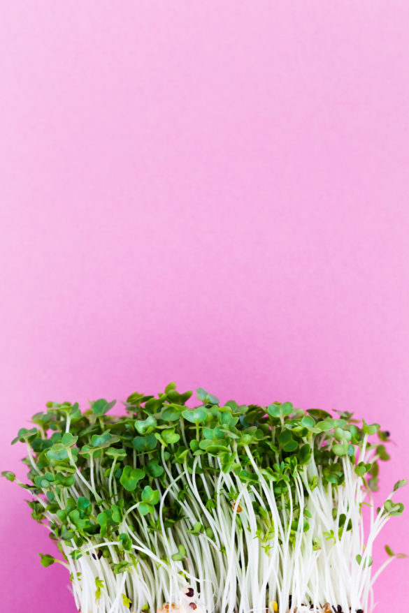 Fresh Cress with pink background